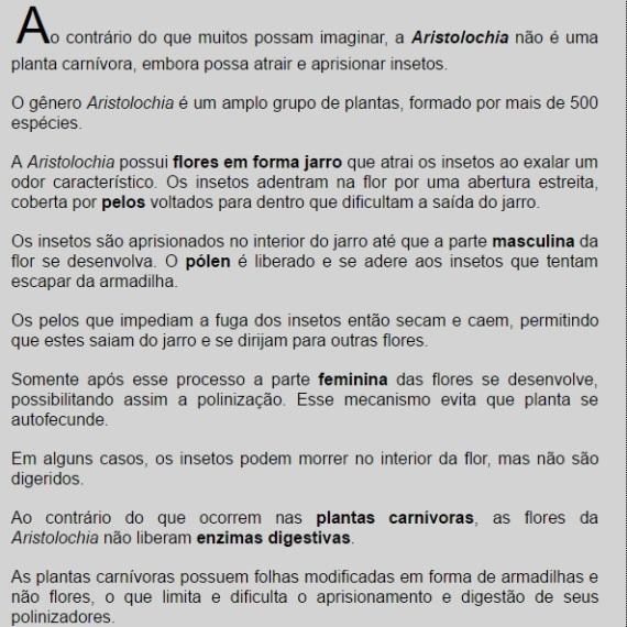 Aristolochia